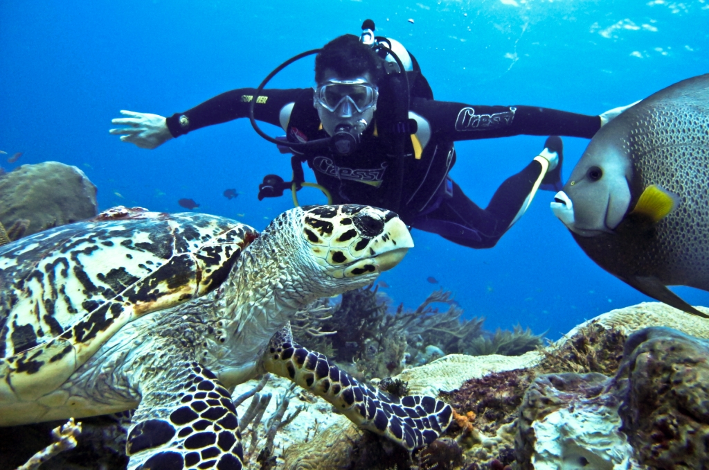 Jardines de la Reina—The Current Queen among Scuba Diving Hotspots