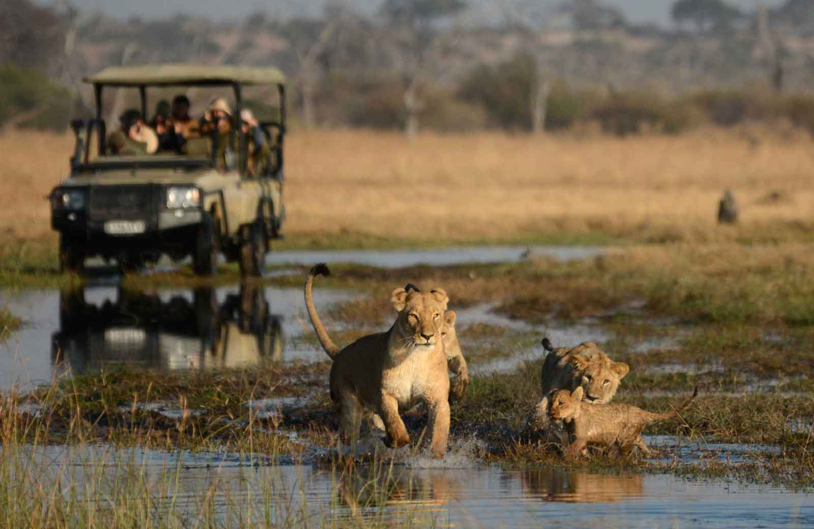 Which African Safari Experience is Right for You?